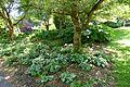 General view - VanDusen Botanical Garden - Vancouver, BC - DSC07354.jpg