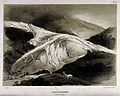 Geology; a large glacier in the Rhone mountains. Lithograph Wellcome V0025132.jpg