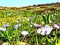 Gevne yakınları - panoramio.jpg