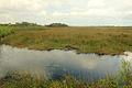 Gfp-florida-everyglades-national-park-landscape-with-alligators.jpg