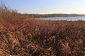 Gfp-wisconsin-pike-lake-state-park-lake-via-marsh.jpg