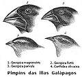 Gl-Darwin's finches.jpg