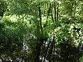 Glasowbach - panoramio.jpg