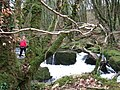 Golitha - The falls - geograph.org.uk - 150326.jpg