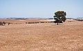 Gone Driveabout 7, East of Geraldton, Western Australia, 24 Oct. 2010 - Flickr - PhillipC.jpg