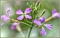 Got Wildflowers (152311055).jpeg