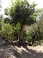 Goza Kalmem - panoramio.jpg