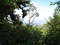 Granada flora.JPG