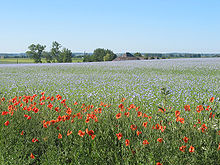 A field of lilac flowers under a blue sky, with dozens of poppies in the foreground. A house and trees are visible behind the field, and further still in the distance are green fields, a church spire, and hills.