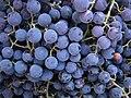 Grapes (4737198898).jpg
