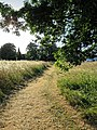 Grass path across Hatfield Heath village green, Essex, England.jpg