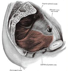 Krónika prostatitis ICD