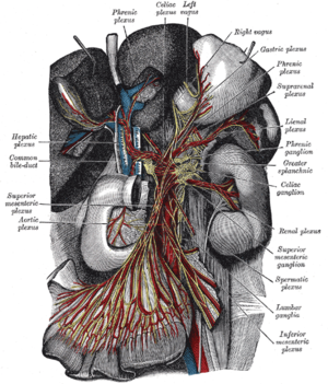 Renal plexus - The celiac ganglia with the sympathetic plexuses of the abdominal viscera radiating from the ganglia (renal plexus labeled at center right).