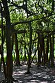 Great Banyan Tree - Indian Botanic Garden - Howrah 2012-09-20 0059.JPG