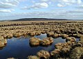 Great Peat Moss - geograph.org.uk - 367928.jpg