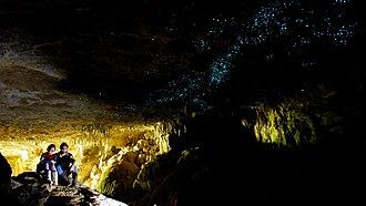 Waitomo Glowworm Caves - Glow worms in the Waitomo Caves