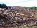 Greshornish Forest - geograph.org.uk - 1195890.jpg