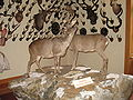 Gressoney-Saint-Jean-Museo-IMG 1841.JPG