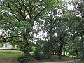 Gromnik park dworski 3.jpg