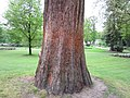 Grote boom, klein meisje (31139537636).jpg