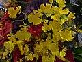 HKCL 香港中央圖書館 CWB 展覽 exhibition flowers February 2019 SSG 05.jpg