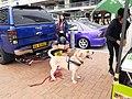 HK 中環 Central 愛丁堡廣場 Edinburgh Place 香港車會嘉年華 Motoring Clubs' Festival outdoor exhibition January 2020 SS2 Ford Ranger 09.jpg