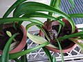 HK Mid-levels High Street clubhouse green leaves plant February 2019 SSG 80.jpg