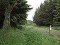 Halwill Moor Plantation - geograph.org.uk - 468334.jpg