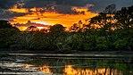 Hampshire Jungle (34109068641).jpg