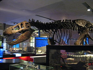 Great North Museum: Hancock - T-Rex in dinosaur hall.