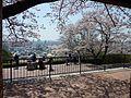 Handayama botanical garden03.jpg