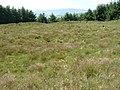Harehope Rings settlement site - geograph.org.uk - 1368634.jpg