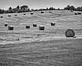 Hay Bales (27872209901).jpg