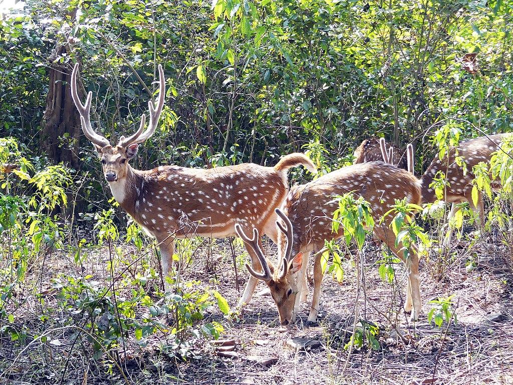 Rajaji Tiger Reserve Places to visit in Haridwar
