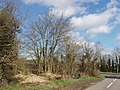 Hedge on road to Hampton Gay - geograph.org.uk - 357811.jpg