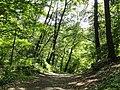 Hemlock Gorge (Charles River Reservation) - DSC09453.JPG