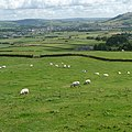 Here a baa, there a baa, Everywhere a baa-baa. - panoramio.jpg