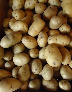 Potato paradox - Image: Hillview Farms white potatoes