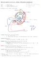 Hippocampus Layering Wiring.tif