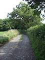 Holbridge Coppice - geograph.org.uk - 494492.jpg