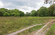 Hondsrug, De Strubben-Kniphorstbosch 05.jpg