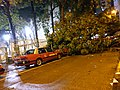 Hong Kong Taxis Damaged by Fallen Trees During Typhoon Mangkhut 2018 in Wan Chai.jpg