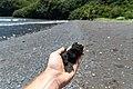 Honomanu black sand beach Maui Hawaii Road to Hana (45690554002).jpg