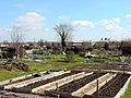 Horfield and District Allotments - geograph.org.uk - 148004.jpg