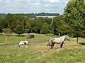 Horse-drawn caravan - geograph.org.uk - 231184.jpg