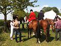 Horses at Higham.jpg