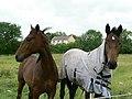 Horses by Junction 41 - geograph.org.uk - 286286.jpg