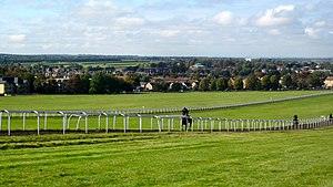 Newmarket, Suffolk - Image: Horses in Newmarket