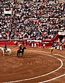 Horses ready - Plaza Mexico.jpg