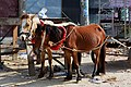 Horses with Carriage at Agrabad (01).jpg